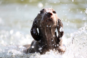 Belief practice and ability, dog having first swim
