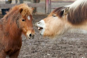 Bigger horse talking at a small pony, talking too much when trying to convince